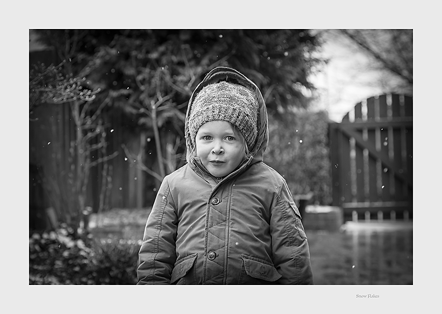 435. Snow Flakes in the garden