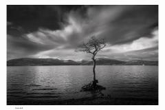 403.  Lone Tree,  Loch Lomond