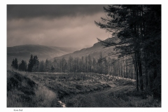 494.  Galloway Forest Park