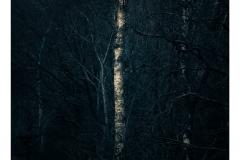 721. Cold Bones, Glen Afton