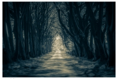 723. Summer Light through the trees, Glennifer