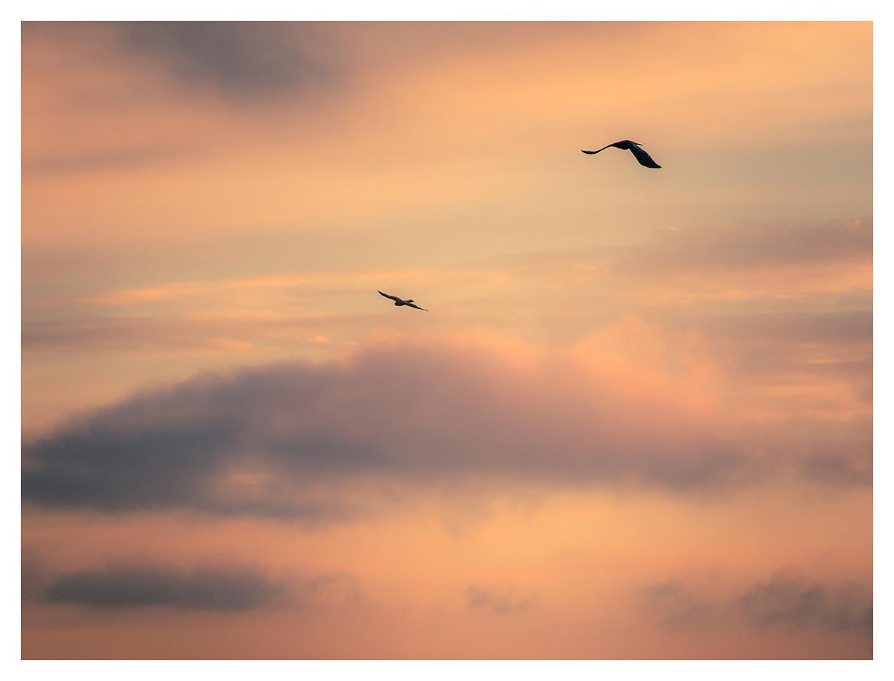 725. Raven and Kestel