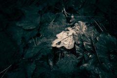 707. The Fallen,  Pollock Park,  Glasgow